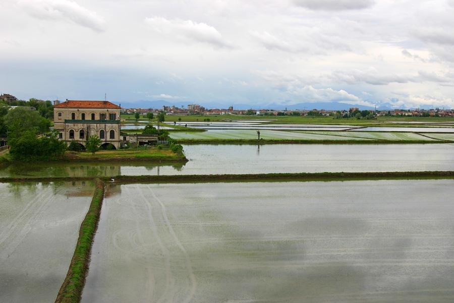 Metodi di ricerca in analisi sensoriale applicata al riso